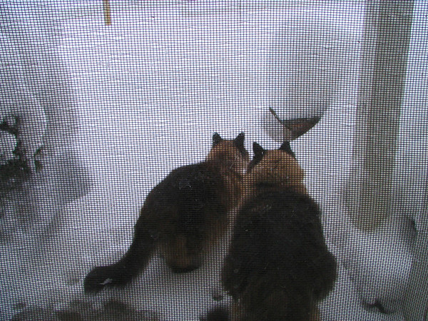 Really they wanted to go out!