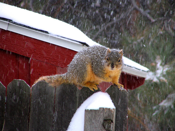 As the storm began, this little guy was making sure his collection of bounty was squared away.