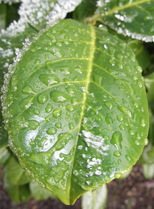 Plant with water drops