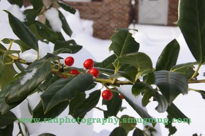 Dec 19 2009 Snowstorm 2 046
