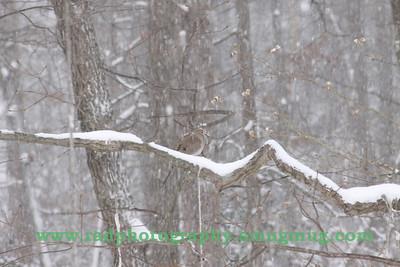 Dec 19 2009 Snowstorm 021