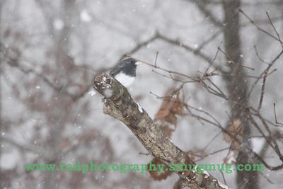 Dec 19 2009 Snowstorm 120