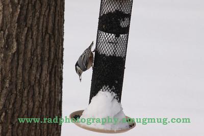 Dec 19 2009 Snowstorm 2 102