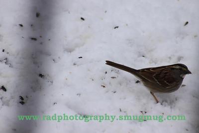Feb 25-27 Snow 022