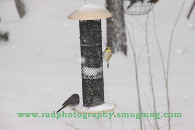 Dec 19 2009 Snowstorm 014