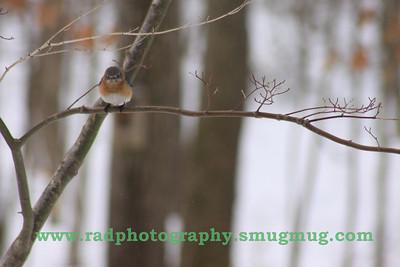 Feb 25-27 Snow 015