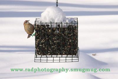 Dec 19 2009 Snowstorm 2 073