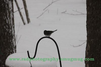 Dec 19 2009 Snowstorm 010