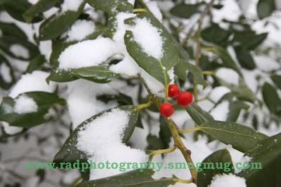Dec 19 2009 Snowstorm 083
