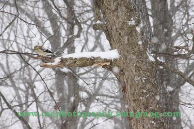 Dec 19 2009 Snowstorm 053