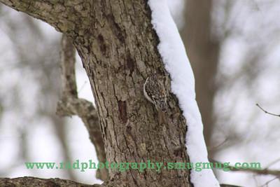 Feb 25-27 Snow 028