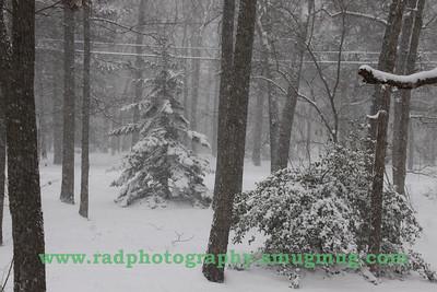 Dec 19 2009 Snowstorm 009