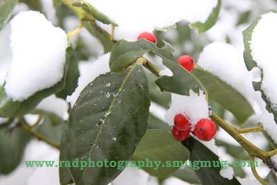 Dec 19 2009 Snowstorm 086