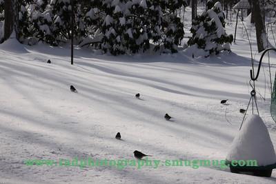 Dec 19 2009 Snowstorm 2 055