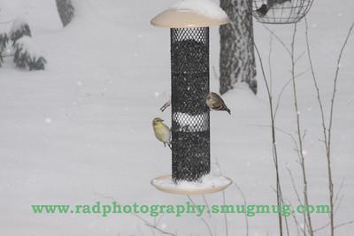 Dec 19 2009 Snowstorm 057