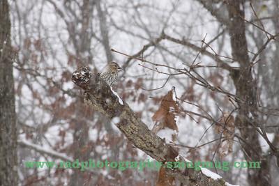 Dec 19 2009 Snowstorm 065