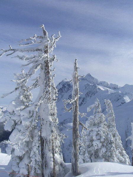 Snow encrusted snags and Mt Shuksan in the background. January 2008