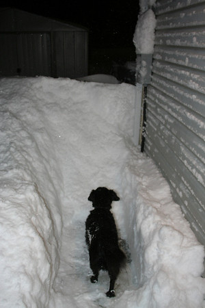 I started to shovel so Mitch could get out.