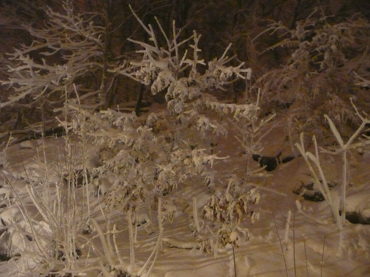 December 26, 2010. A late-Christmas storm brought 18 inches to Lynn, MA.