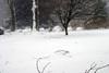 1-10-10-blizzardIMG_4022