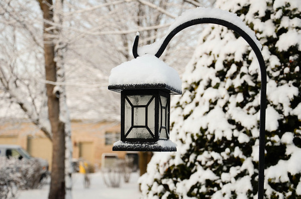 Winter Snow - 2011