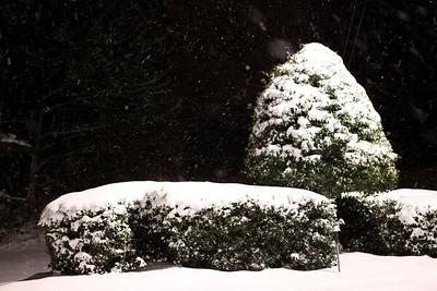 Snow on bushes lit by a street light.