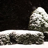 Snow on bushes lit by a street light.