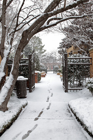 The snow had just begun falling.