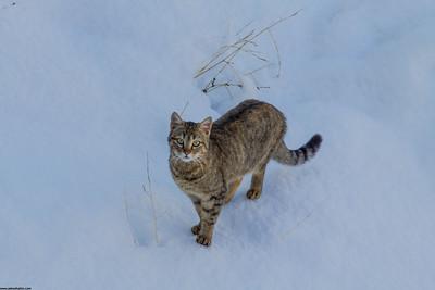 """A """"snowy"""" meoww!"""