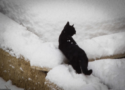 Black Cat on white snow...