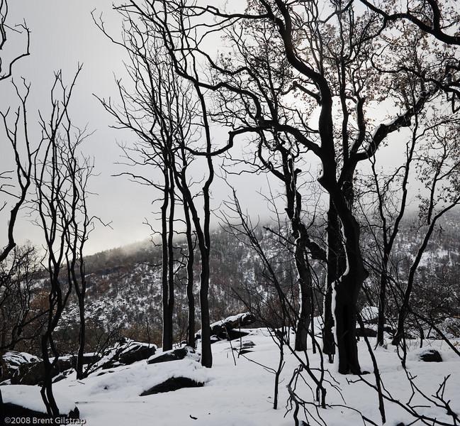 Crispy Trees and Snow<br /> 15 December 2008