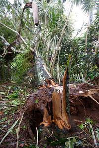 Fallen tree in front garden.