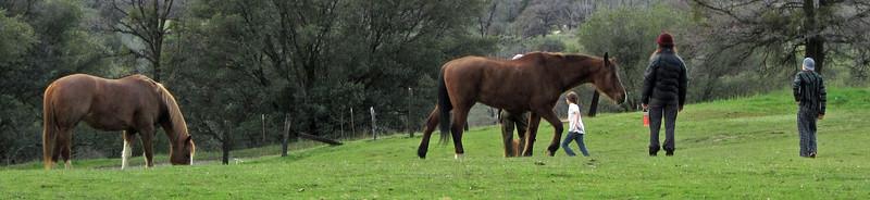 HorsesCrop1