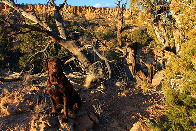 "Beau ""Marley"" Brown my companion and Hiking Buddy for more than 6 years. She will follow, or at least try, to follow you anywhere."