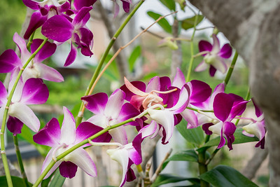 Mama's orchids