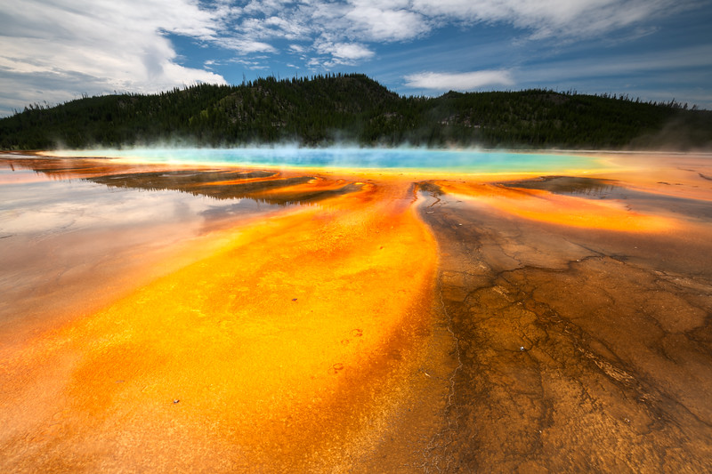 Yellowstone National Park, Grand Prismatic, Buffalo Prints