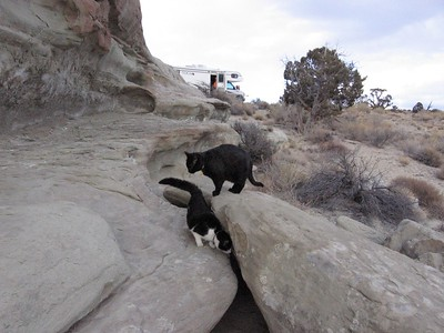 Max and Mini check out the possibilities of exploration on the Escalante, Utah.