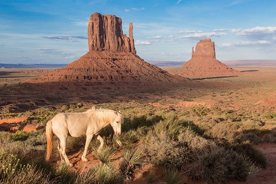 Navajo pony left to free graze during the night, Monument Valley, Arizona.