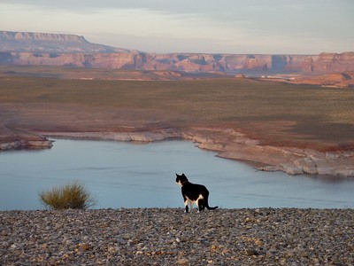 Mini checking out the vista at Lake Powell, Utah.