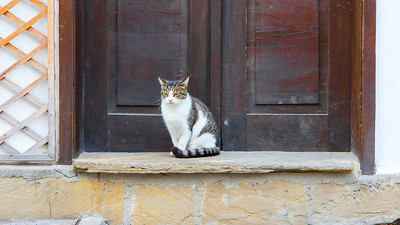 A porch step kitty in Veliko Tarnovo, Bulgaria.
