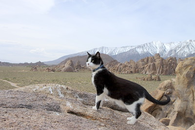 Mini the Kitty searches for the next summit to scale in the Alabama Hills, California.
