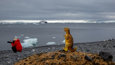 Tahoetyranno taking in the sights and smells of the penguin colony.  He wasn't too happy about the weather the day he chose to go ashore.