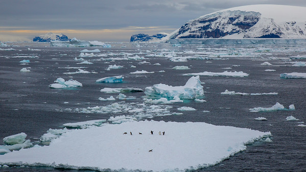 A group of penguins resting on sea ice.  They group away from the edge so they might keep a wary lookout for a leopard seal.