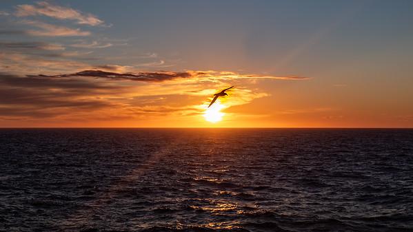 An  Albatross seen of the stern of the Silver Explorer.