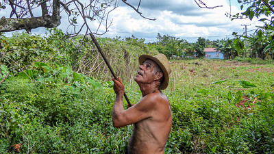 Vinales is famous for its coffee as well as its cigars.  While exploring a road from our casa particular to town we came across this gentleman harvesting coffee in his orchard.
