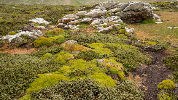 The low growing ground cover of West Point Island in the Falklands