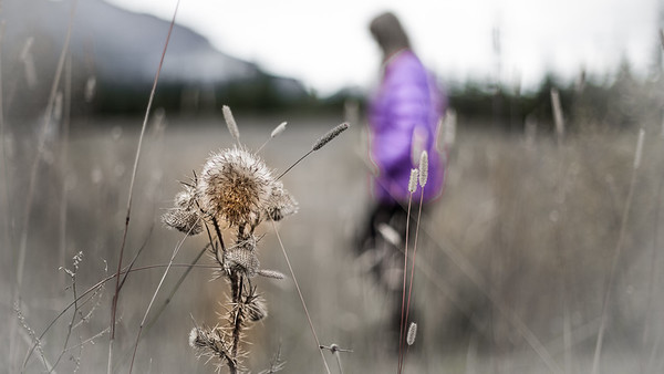 Linda wandering through a thistle filled meadow on the Beartooth Highway in Wyoming