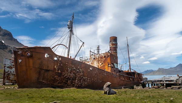 An abandoned whaling ship with one of the local inhabitants, a fur seal striking a pose.