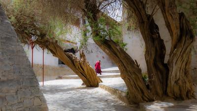 A monk making his way through Tashi Lhunpo Monastery in Shigatse.