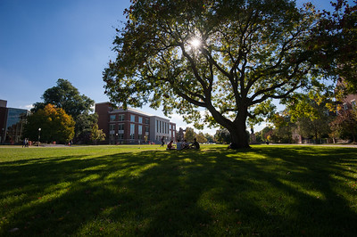 University of Rochester students, l-r: Colleen Meidt, Andrew Holloman, Justin Montione and Alex Fortier, all '18 enjoy a warm Friday afternoon under a tree on Wilson Quad September 26, 2014. // photo by J. Adam Fenster / University of Rochester